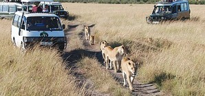 enviromental effects of tourism in kenya What are the environmental benefits of tourism for kenya -income gained helps protect wildlife and scenery such as the bamburi national trail -income from tourists can help open up more conservation areas.